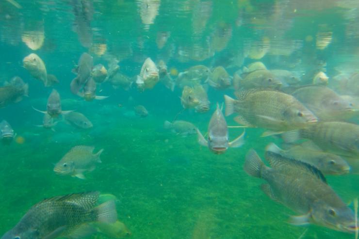 teknologi for å muliggjøre fiskeoppdrett til havs